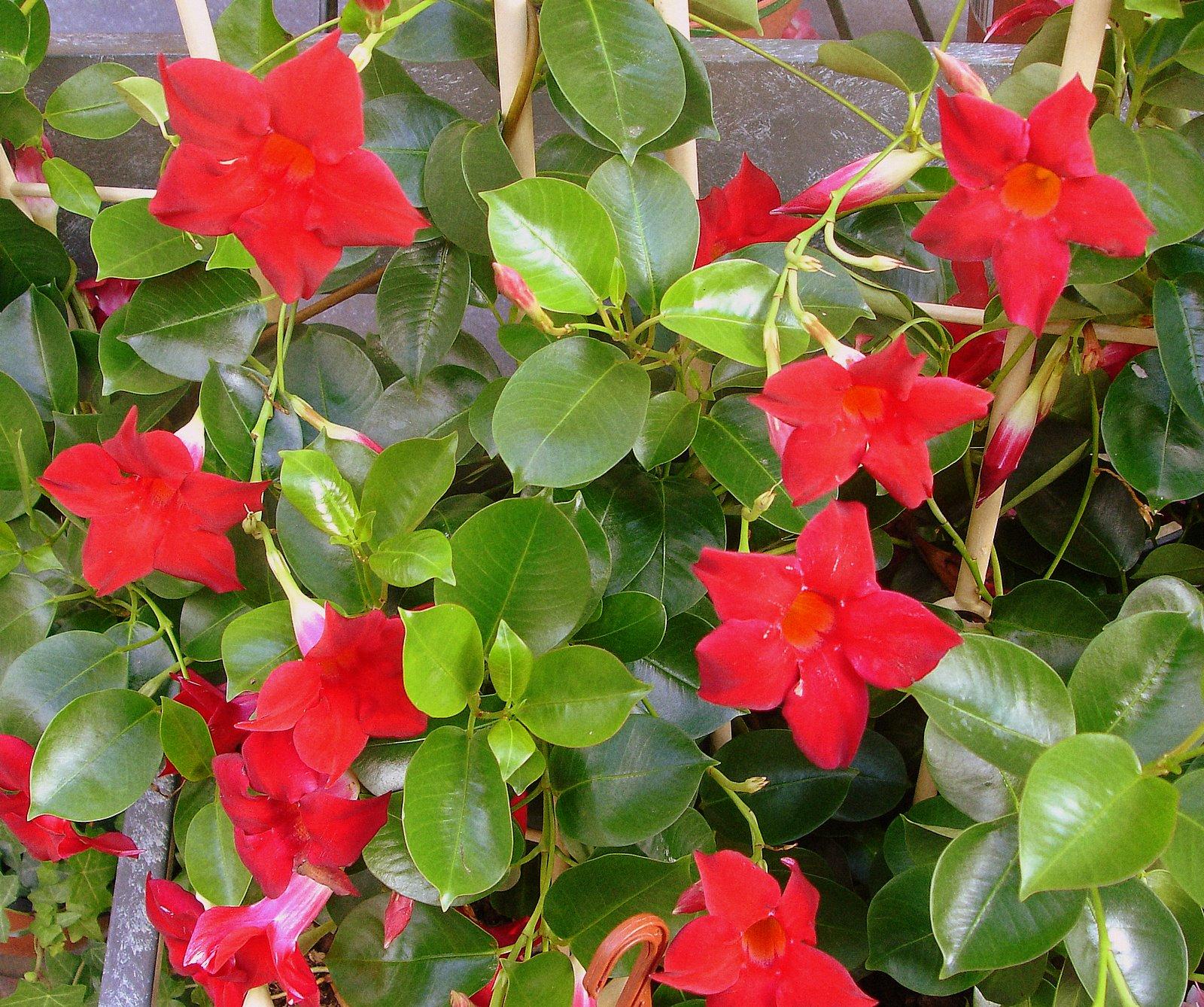 Sabes cuidar tus plantas de exterior easy repair - Plantas para el exterior ...