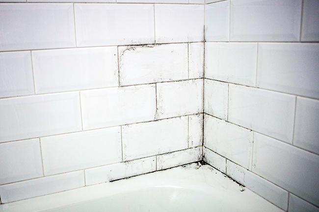 Moho en mis paredes no easy repair - Moho en la pared ...
